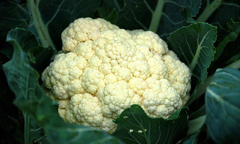 Cauliflower close up.