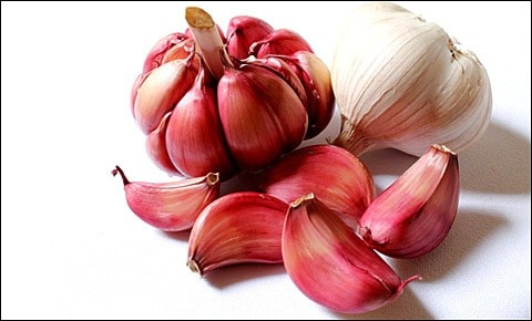 Red and white garlic.