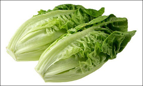 Romaine lettuce on white background.