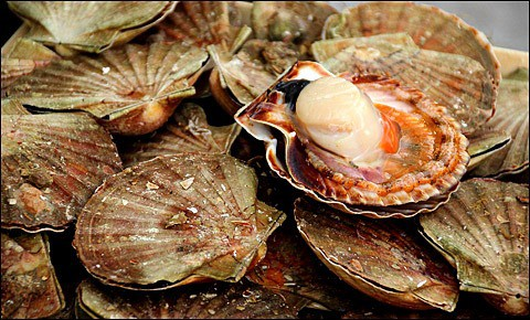 Fresh scallop.