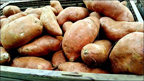 Just harvested sweet potatoes.